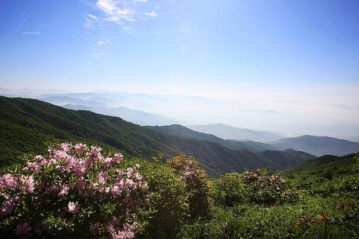 Huang Mei Shan, Spring, Azalea