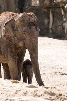Elephant, Baby Elephant, Baby, Small Animal, Safari