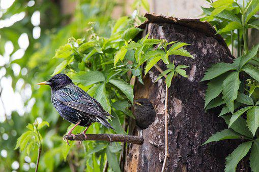 Star, Box, Bird, Breed, Plumage, Animals, Nature