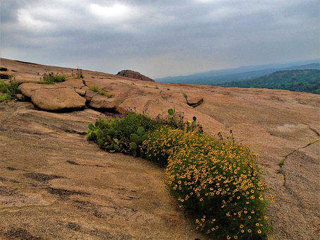 Enchanted Rock Texas, Landscape, Wild Flowers