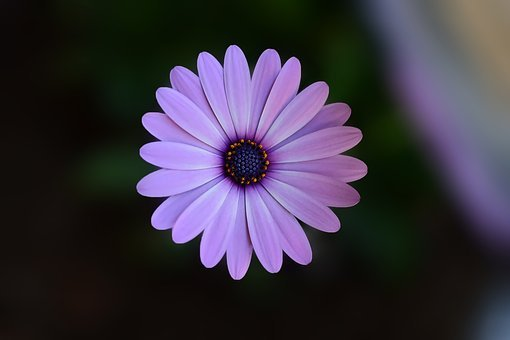Flower, Green, Plant, Nature, Background, Macro, Close