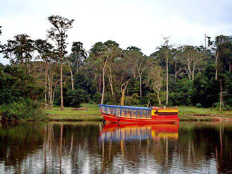 Gayana, Jungle, River, Dawn, Forest, Morning, Travel
