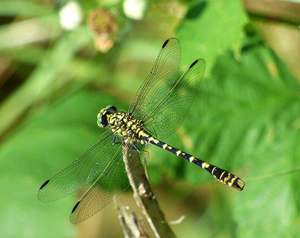 Demoiselle, Dragonfly, Insect, Nature, Green, Sun