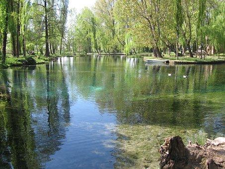Lake, Pond, Willows