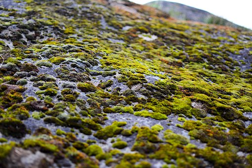 Moss, Rock, Stone, Nature, Outdoor, Environment, Fresh