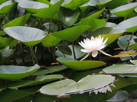 Pond, Garden, Photography, Landscape, Landscaping