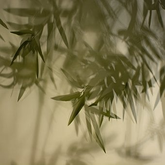 Bamboo Shadow, Curtain, Light, Chaos