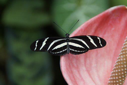 Butterfly, Exot, Exotic, Insect, Tropical, Animal, Wing