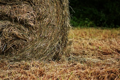 Hay Bales, Hay, Field, Harvest, Meadow, Straw