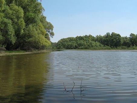 Lake, Water, Backwater, Spring, Wood, Lakeside