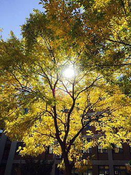 Sunshine, Tree, Yellow, Green, Campus