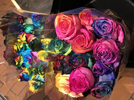 Roses, Rainbow, Bouquet, Flowers, Valentine's Day, Love