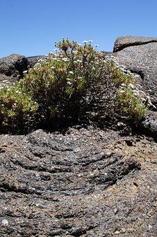 Teide National Park, National Park, Rock