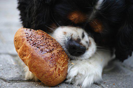 Dog, Pastry, Sesame, Street, Hungry, Sweet, Food