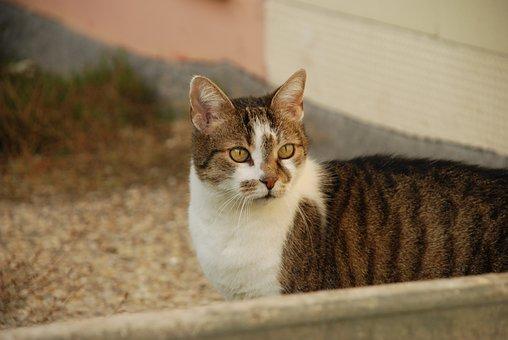 Cat, Domestic Cat, Pet, Mackerel, Dear, Mieze, Adidas