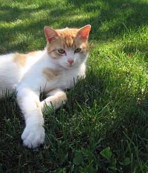 Cat, Tomcat, Lie, Grass, Rozkošné, Peace, Breather