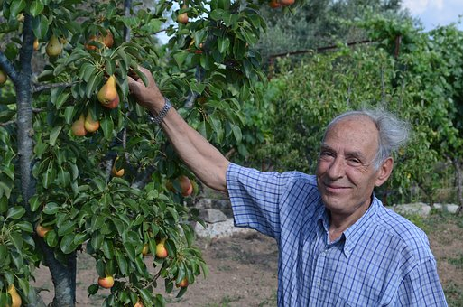 Farmer, Salento, Collection, Pears, However, Campaign