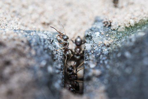 Ants, Macro, Working, Insect, Wildlife, Worker, Work