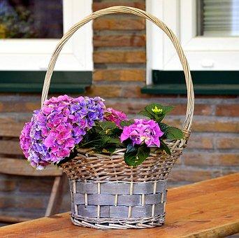 Flower Basket, Basket, Plant, Flowers, Nature, Bloom