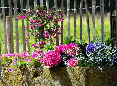 Planters, Colorful, Summer, Blossom, Bloom, Color
