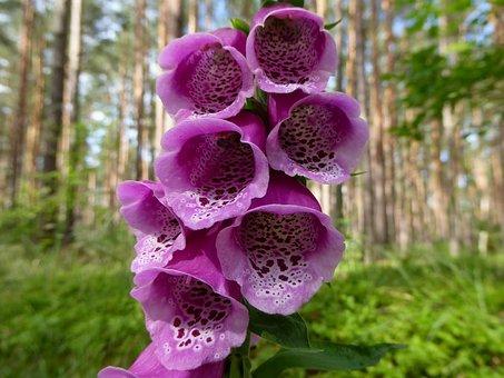 Thimble, Plant, Nature, Flowers, Flower