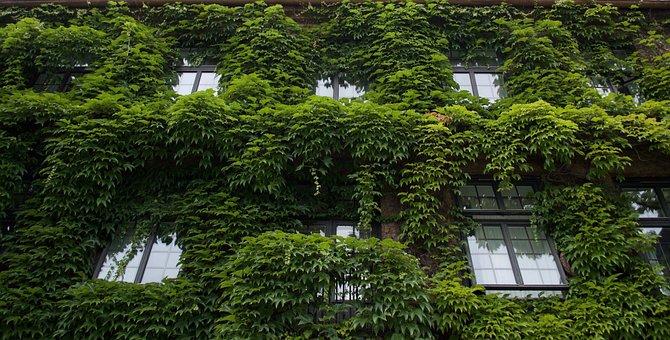 House, Overgrown, Windows, Vines, Exterior, Green