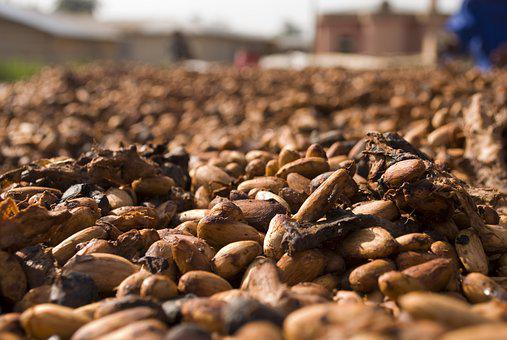 Cocoa, Beans, Food, Chocolate, Brown, Cacao, Ingredient