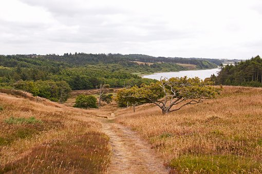 Thy, Jutland, Denmark, Path, Hills, Grass, Woods, Lake