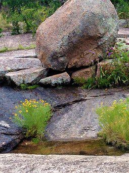 Enchanted Rock, Wild Flowers, Pink Granite, Water