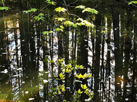 Reflection, Leaves, Water, Stream, Pond, Natural