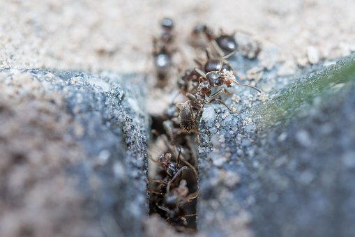 Ants, Macro, Working, Insect, Wildlife, Worker, Work