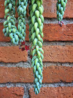 Succulent, House, Garden, Cactus, Plant, Nature, Botany