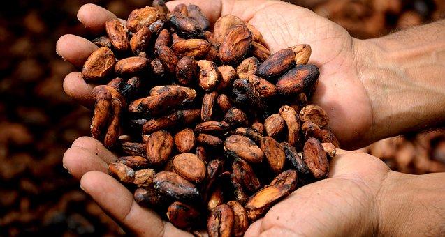Hands, Cocoa, Cacao, Delicious, Cocoa Nibs, Cocoa Bean