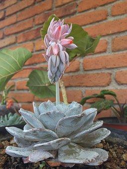 Plant, Succulent, Green, Nature, Garden, Decoration