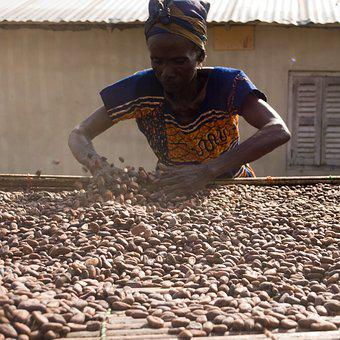 Cocoa, Beans, Drying, Ingredient, Chocolate, Food