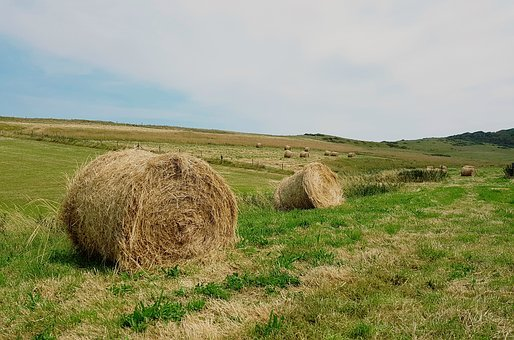 Hay Bales, Hay, Pasture, Meadow, Landscape, Agriculture