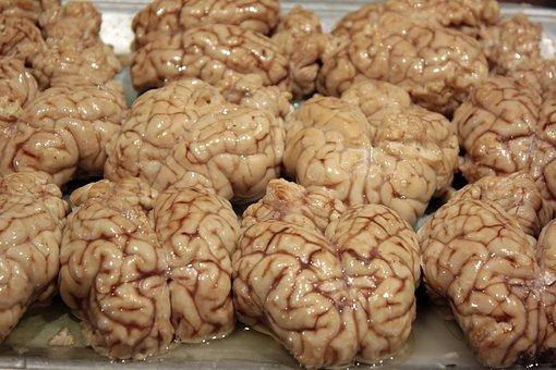 Brains, Disgusting, Organ, Neuron, Mind, Thinking