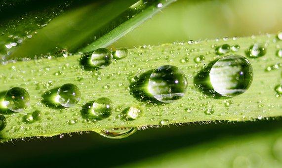 Leaf, Water, Green, Dew, Nature, Drop, Drops, Rain