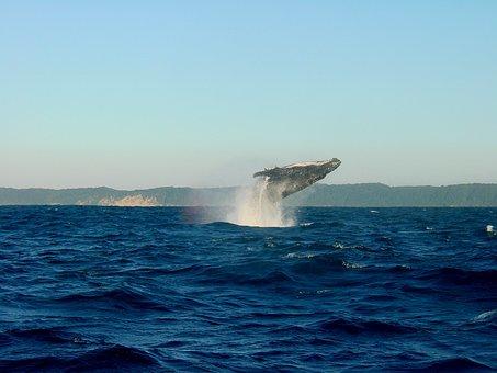 Wal, Humpback Whale, Ocean, Fin, Sea, Marine Life