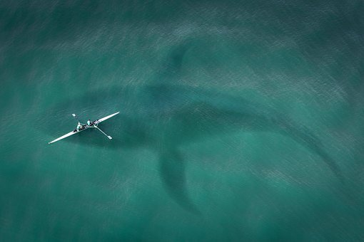 Boot, From Above, Top View, Hai, Great White Shark