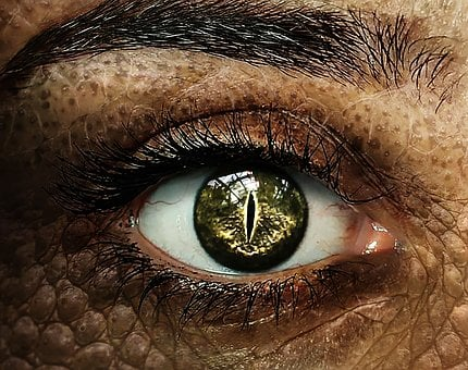 Crocodile, Crocodile Eye, Crocodile Woman, Woman