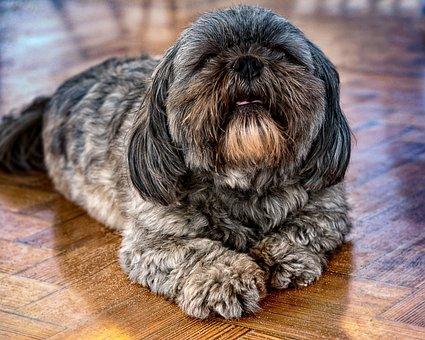 Dog, Pet, Cafe, Animal, Cute, Canine, Sitting, Doggy