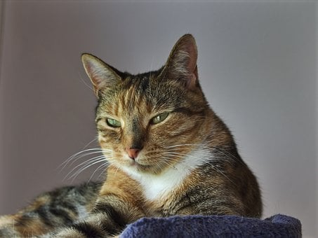 Animals, Cat, Tabby Female, 2, 5 Yrs, Fur, Gentle