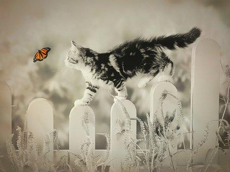 Cat, Butterfly, Whimsical, Pet, Kitten, Fun, Sepia