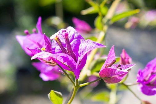 Pink, Flowers, Nature, Garden, Park, Purple, Wild