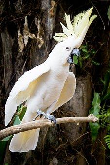Parrot, White, Twitter, Forest, Animal, Bird, Zoo