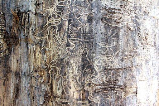 Termite, Tracks, Tree, Damage, Nature, Brown, Pattern
