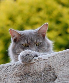 Cat, Feline, Pet, Kitten, Domestic, Kitty, Fur, Tabby