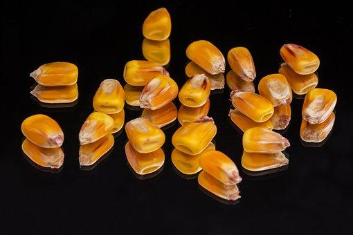 Corn, Plant, Mag, Crop, Yellow, Black, Mirror