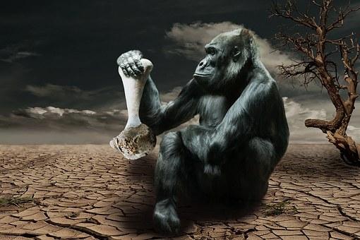 Gorilla, Hunger, Environmental Awareness, Monkey